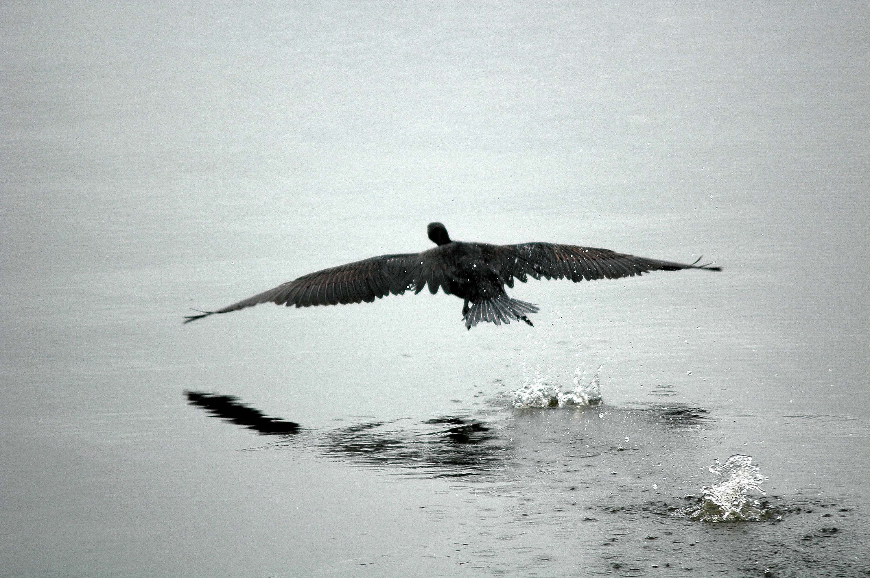 fugl som letter bilde